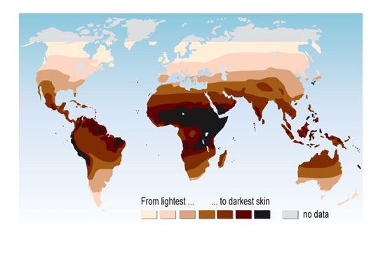 melanin map